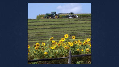 This picturesque farm scene at Highland Farms owned by the Sherbine family along Route 601 outside of Somerset is all the more dazzling with sunflowers, in the foreground. Family farms are a place of serenity in Somerset County but also contain potential hazards that children need to take into consideration.