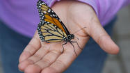 Photos: Botanica's Butterfly Release