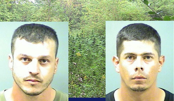 Gerardo Correa, 29 and Jose Haro-Gutierrez, 29, were arrested after Correa admitted to police they planted marijuana in this field in Pembroke Township in Kankakee County.