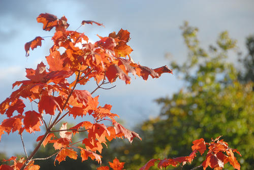 A splash of bright orange maple leaves contrast against a stormy blue sky this morning, near Petoskey. Saturday, Sept. 22, marks the official beginning of fall on the calendar and many area trees have begun to show their autumn colors.