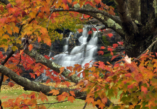 "A reader-submitted photo of a tree in the parking lot of Kent Falls State Park, saying the shot ""offered a chance to frame the lower falls with colorful foliage on a cool October afternoon."""
