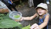 Kids release 200 beetles to launch biocontrol program in Broward