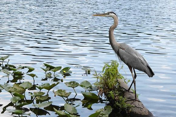 Wildlife on the St. Johns River