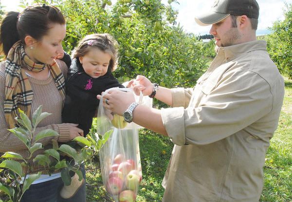 Kathryn Day (from left) and daughter, Lilianne, 1, drop apples into a bag held by husband and dad, Chris Day, while picking apples at Friske Farm Market, Saturday. The Gaylord family was enjoying the day picking apples and participating in the activities at the annual fall harvest festival.