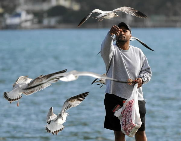 A man feeds gulls at Currie Park in West Palm Beach. South Florida remains warm while much of the nation is cooling down.