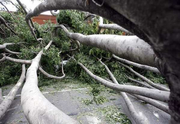 Trees crashed down on Green Street in Pasadena during the windstorm of Nov. 30 and Dec. 1. The storm damaged homes and businesses and knocked out power to hundreds of thousands of people in the San Gabriel Valley.
