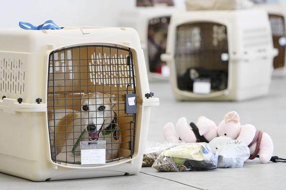 Airline for pets starts flying in various US cities