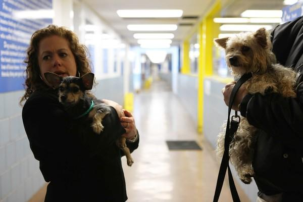 Cherie Travis, who was sued Tuesday over questionable payments by her nonprofit animal rescue group, was formerly commissioner of the Chicago Department of Animal Care and Control.