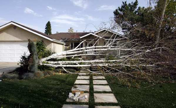 A tree fell across the front yard at 4916 Indianola in La Canada Flintridge on Thursday, December 1, 2011. Strong winds caused damage throughout the area.