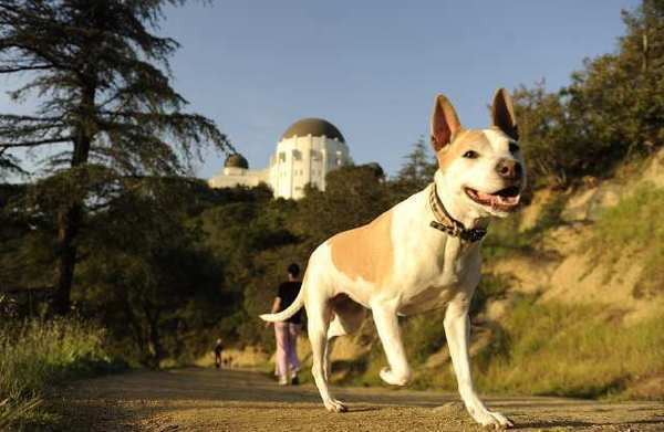 A dog, probably not named Fido, on a Griffith Park trail.