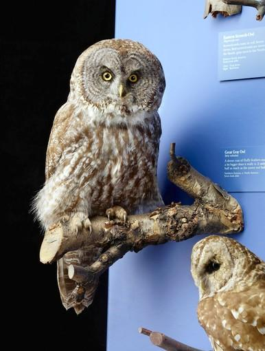 Renovated Gidwitz Hall of Birds opens at the Field Museum.
