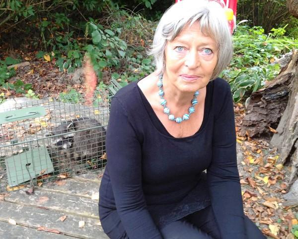 "Marga Trautmann-Winter, with a trapped raccoon behind her, says the animals eat fruit from her trees and leave her backyard, where her grandchildren like to play, covered in droppings. ""They look very smart, but I think they are very dangerous,"" she says."