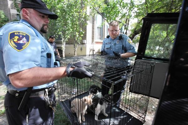 Elgin community service officers carry cats from a home in the 200 block of Villa Street on Wednesday. Officers found about a dozen cats living in the home and 60 dead cats in a van parked outside.