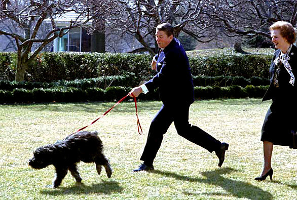 President Reagan getting dragged by Lucky the Bouvier des Flandres