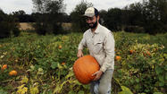 Pumpkin season is busy season for Howard County farms