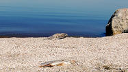 Dead fish odor could help the Salton Sea