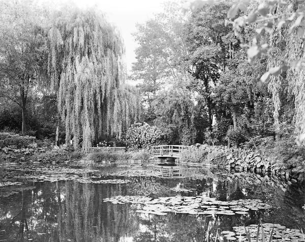 """Combray (Giverny III)"": In this and other photos, Elger Esser sought to create an antithesis of Claude Monet's colorful work."