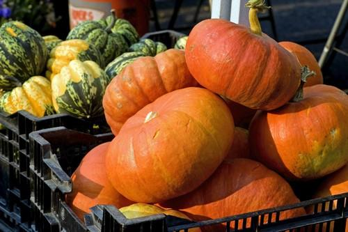 "Rouge Vif d'Etampes pumpkins, a French heirloom variety shown here in the front, and Carnival squash grown by McGrath Family Farms and sold at the Hollywood farmers market.<br> <br> <b>RECENT & RELATED</b><br> <br> <a href=""http://www.latimes.com/features/food/la-fo-seasonal-cooking-pg,0,5765260.photogallery"">Cooking through the seasons: Your guide to the seasons freshest produce, recipes included</a><br> <br> <a href=""http://projects.latimes.com/farmers-markets/""><b>INTERACTIVE MAP:</b> Explore your local farmers market.</a><br> <br> <a href=""http://www.latimes.com/features/food/la-fo-recipeindexarchive2008,0,5938840.storygallery"">Browse recipes from the L.A. Times test kitchen</a>"