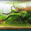 2008 AGA Aquascaping Contest