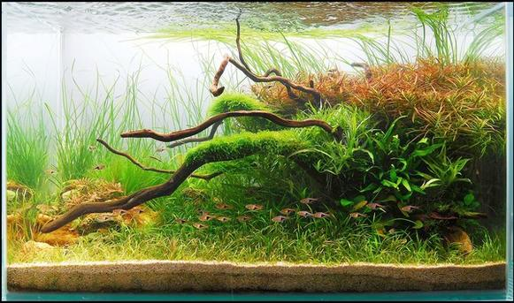 "Who says an aquarium has to be all about fish? All over the world, planted aquarium enthusiasts practice <a href=""http://www.latimes.com/features/home/la-hm-aquascapes19-2009sep19,0,6049008.story""><u>the art of underwater gardening</u></a> -- creating lush, natural-looking landscapes that live in the confines of a tank. These hobbyists communicate via the Internet, trading plants and information. They also trade pictures of their tanks. Each year the Aquatic Gardeners Assn., a group of enthusiasts 1,300 strong, holds a contest to name the best tanks in the world. Here you'll find the winning aquascapes of the past five years and get a taste of a whole new way to look at an aquarium. To read more about <a href=""http://www.latimes.com/features/home/la-hm-aquascapes19-2009sep19,0,6049008.story""><u>the art of aquascaping from California to Japan</u></a>, read our story here.<br> <br> -- Deborah Netburn<br> <br> 2nd place aquatic garden medium: 172 liters (46 gallons)<br> <br> ""Rhythm of Nature"" by Harry Kwong, Ma Tau Wai Estate, Hong Kong"