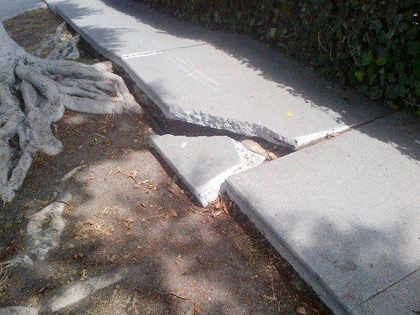A section of broken sidewalk near the corner of Maplewood Avenue and Appleton Way in West Los Angeles. Last year the city spent $4 million to settle trip-and-fall claims.