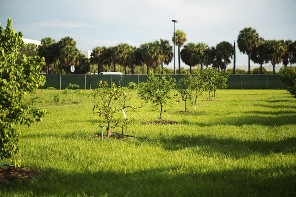 <br><hd2>Staff photos/ Nick Sortal/SouthFlorida.com</hd2><br>