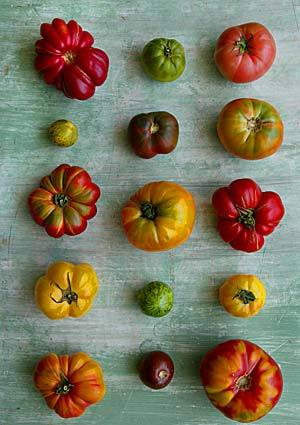 Tomatoes come in all shapes and sizes