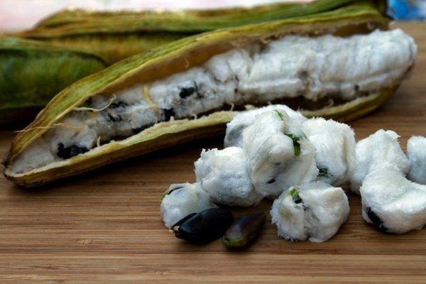The long pods of ice cream beans split open to reveal dark seeds wrapped in a sweet, edible white casing.