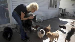 Judge: Tinley Park animal activist sentenced to probation, $8K fine, psych evaluation