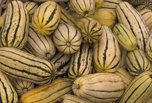 Delicata squash grown by Fairview Gardens in Goleta.