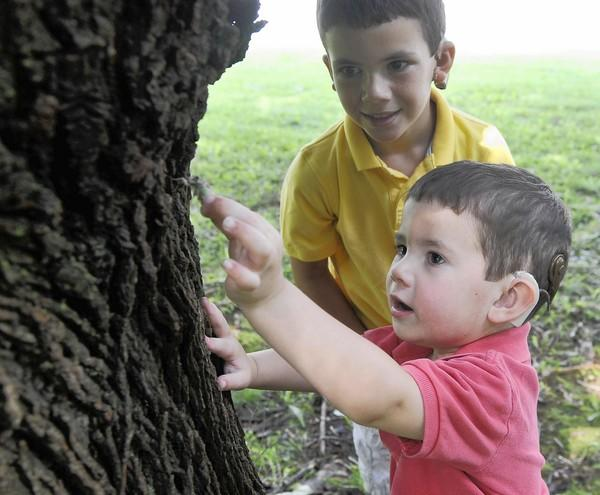 Ethan Duick, 2, plucks a cicada off a tree as his brother, Zachary Duick, 6, watches.