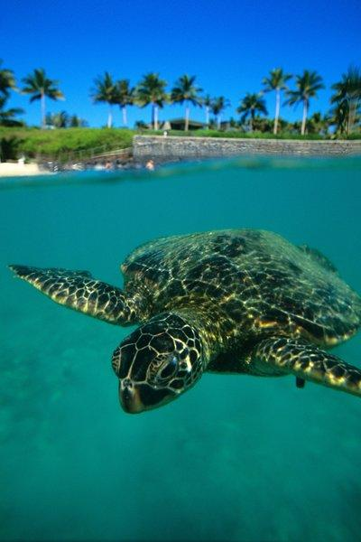 At many of Hawaii's 100 public beaches, you can find crystal-clear water brimming with local wildlife