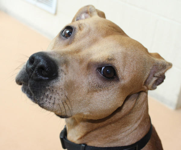 Diamond is a lovebug and is in need of a new home