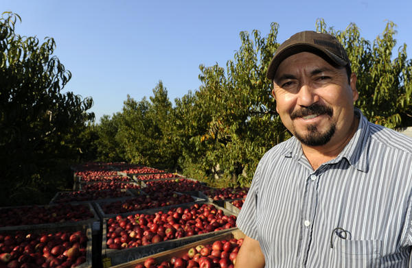 Adrian Barrera leads a crew of migrant farm workers from Mexico who pick apples at Baugher Farms. The migrants work on the farm for 8 months out of the year, then move on to work somewhere else or return to their native country until the next growing season.