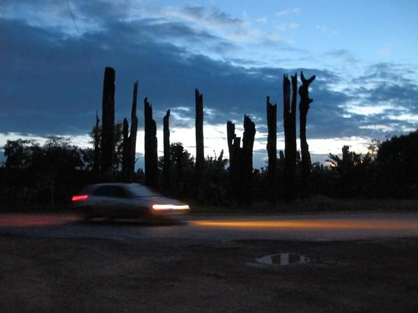 At the scene of the massacre, 19 burned trunks of Brazil nut trees stand as a roadside monument to the dead.