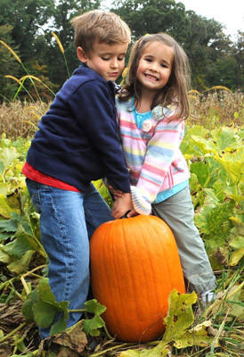 Terry Hersh, 5, and his sister Evelyn Hersh, 4, of Bethlehem Twp. struggle to lift a pumpkin which they selected in a Juniperdale Farms field. This was at the annual Northampton County Open Gate Farm Tour at Juniperdale Farms in Plainfield Twp. Saturday.