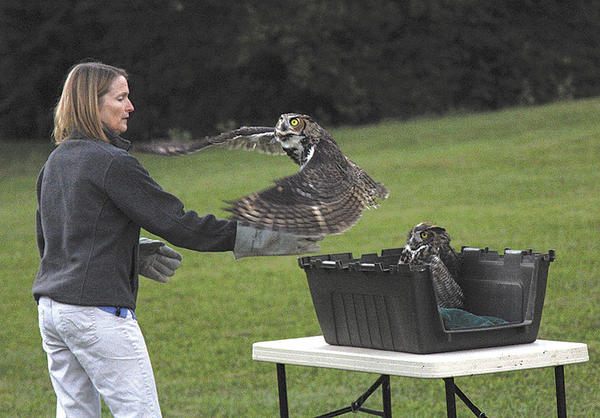 Clark, a great horned owl, is released into the wild by Dr. Belinda Burwell at Saint James School. A companion owl also was released on Sept. 19.