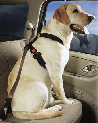 "Pet safety experts of <a href=""http://www.barkbuckleup.com/"">BarkBuckleUp.com</a> teamed up with popular car site <a href=""http://www.edmunds.com/"">Edmunds.com</a> to come up with a list of 10 ""pet-safe"" cars for your consideration. Christina Selter, founder of Bark Buckle Up, says that even the calmest unrestrained pets can become frightened in a moving vehicle, so the use of restraints is key: ""In the event of a sudden stop or accident, the animal can injure other passengers or be thrown through the windshield, then hinder the efforts of rescue workers or even cause another accident by escaping into the street.""<br> <br> So, in alphabetical order, here are the top 10 recommended vehicles for traveling with your pet and an explanation of the features that make them stand out when it comes to pet safety."