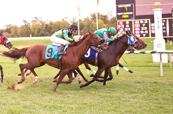 Rockaby Bay (3), ridden by Luis Garcia, and Masterel (6), with jockey Chris DeCarlo, finish in a dead heat for the win in Mondays seventh race at Laurel Park. Colonel Bill (9) and Elkhorn Creek (inside horse) had a dead heat for third place.