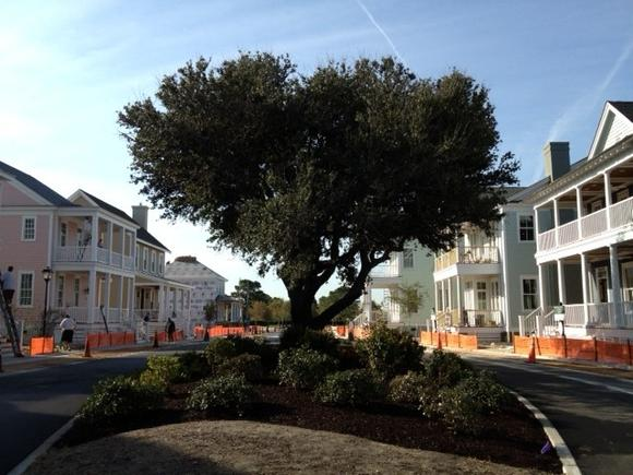 Live oaks, landmarks at East Beach, showcases the green spaces at East Beach Homearama.