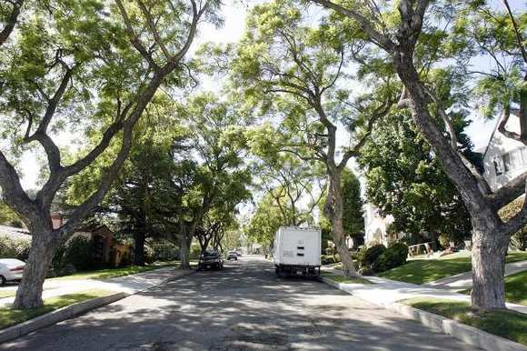 The tree-lined view down Crestview Avenue that is within the borders of the newly declared North Cumberland Heights historic district in Glendale on Wednesday, October 3, 2012.