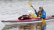 Though it's been a recreational sport since the mid-1800s, kayaking is currently enjoying a major moment in the sun — or shade, as the case may be.
