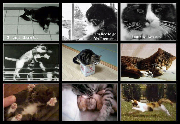 "<a href=""http://graphics.latimes.com/vignette-cat-video-sampler/"">Henri, Maru and Bub have become Internet sensations, appearing in YouTube videos that have garnered millions of views. To see them and other cat Web stars, check out this interactive cat video sampler.</a>"
