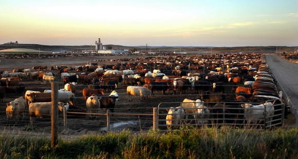 Study finds living near livestock raises risk of antibiotic-resistant infection
