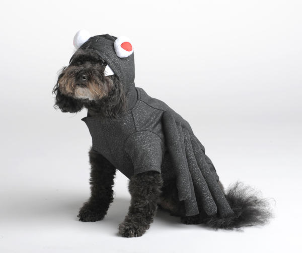 Martha Stewart has become something of the high priestess of petwear, never failing to come out with a sweet, reasonably well-made collection. Teddy models her fanged spider, available at PetSmart for $19.99.