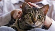 Ask the pet expert: affectionate cats