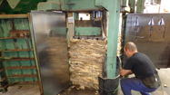 Wool preparation for export to China.