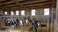 Dairy farm in Germany.