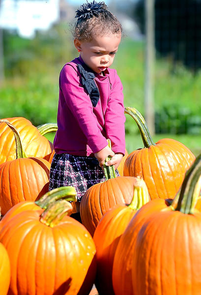 Taliyah Ledbetter, 2, of Martinsburg, W.Va., tries to lift a pumpkin off the ground Thursday afternoon at Butler's Farm Market in Martinsburg.