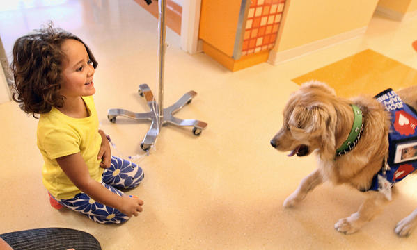 Nutmeg, a 3-year-old golden retriever, at Joe DiMaggio Children's Hospital in Hollywood  plays with Five-year old patient Sofia Lugo.